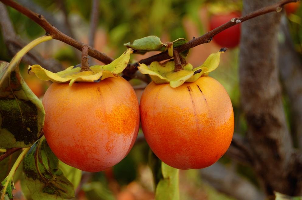 Kaki frugt
