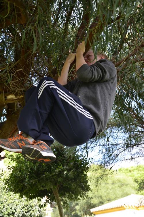 tree_pullups